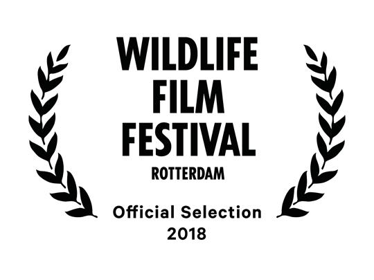 <em>The Angel's Secrets</em> ha sido oficialmente seleccionado para el Wildlife Film Festival de Rotterdam