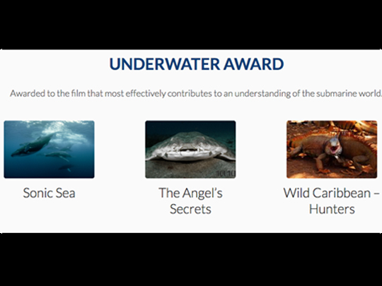 <em>The Angel's Secrets</em>, nominated for the Underwater Award at the Wildlife Film Festival in Rotterdam