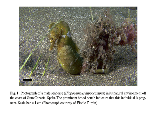 Our seahorses caught the attention of International Researchers