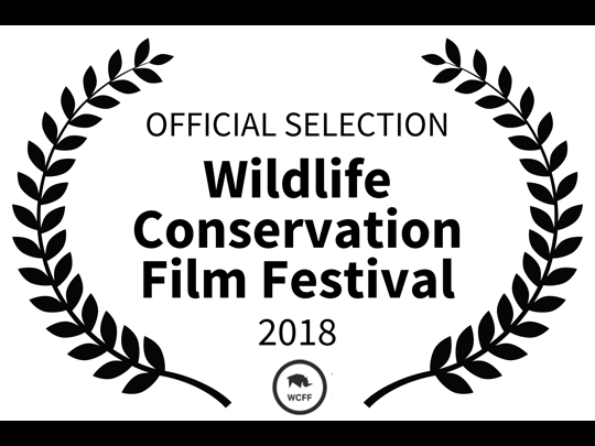 Official Selection for <em>The Angel's Secrets</em> at the Wildlife Conservation Film Festival in New York