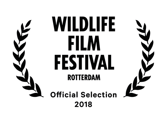 Official Selection for <em>The Angel's Secrets</em> at the Wildlife Film Festival of Rotterdam