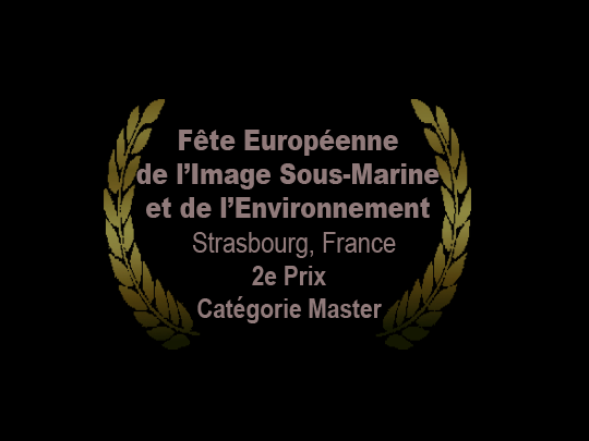 <em>Les secrets de l'ange</em> wins the 2nd Prize in its category at the Fête Européenne de l'Image Sous-Marine et de l'Environnement (European Underwater and Environmental Image Festival)