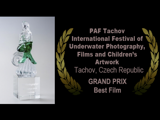 <em>The Angel's Secrets</em> wins the GRAND PRIX at the 41st PAF Tachov Festival in the Czech Republic